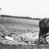Young boy ploughing the Scotty Bryce farm's yard