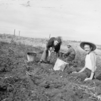 Dorothy and Gert McNabb digging up potatoes