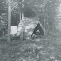 [Pitched tent among trees]