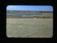 Middleton's Old Camp-Looking N.W. Toward C's Crossing Clarksboro Sask Sept.28-1948