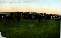 Ranching in the Canadian West. Cattle Round-up