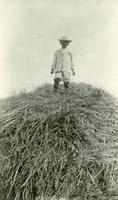 [Child standing on a haystack]