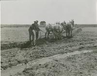 Irrigation, Lethbridge District, 1937