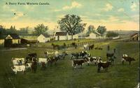 A Dairy Farm, Western Canada.