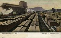 Western Canada's Wheat Arriving at Fort William
