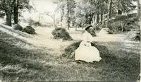 [Woman sitting on haystack]