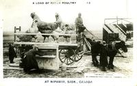 A Load of Fancy Poultry at Nipawin, Sask., Canada