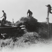Threshing on the F Kristoff Farm 1944