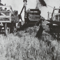 Threshing 1925