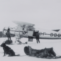 Dog team by plane