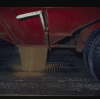[Red truck dumping grain from bottom in grain elevator]