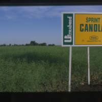 Ultrabred Sprint Canola - Saskatchewan Wheat Pool