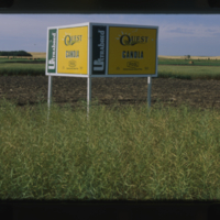 Ultrabred Quest Canola - Saskatchewan Wheat Pool