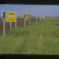 Ultrabred Allons, Apollo Canola and Caster Rapeseed - Saskatchewan Wheat Pool