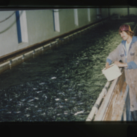 [Man feeding fish in tank on fish farm]