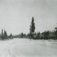 Winter in Prince Albert National Park - Jan. 11, 1934