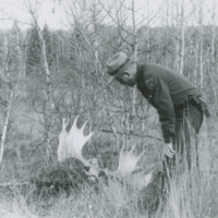 Examination of moose horns for evidence