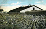 Sheep Ranch, Western Canada. On line of C.P.R.